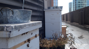 Seaport Bees